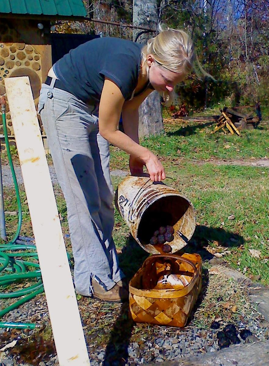 black walnut process