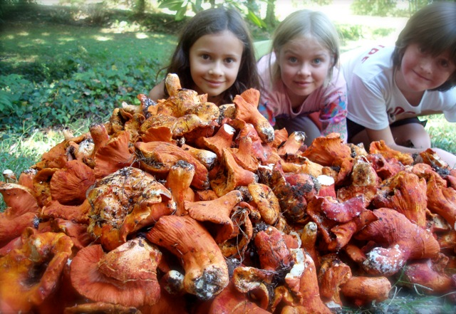all you can eat lobster mushrooms