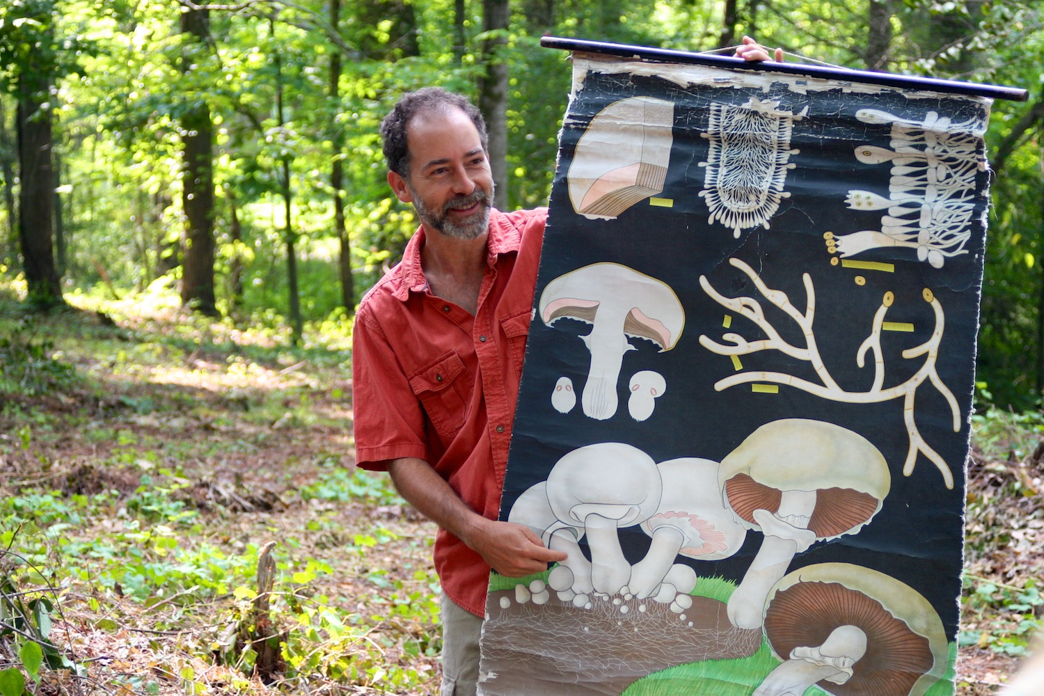 the birds and the basidiomycetes