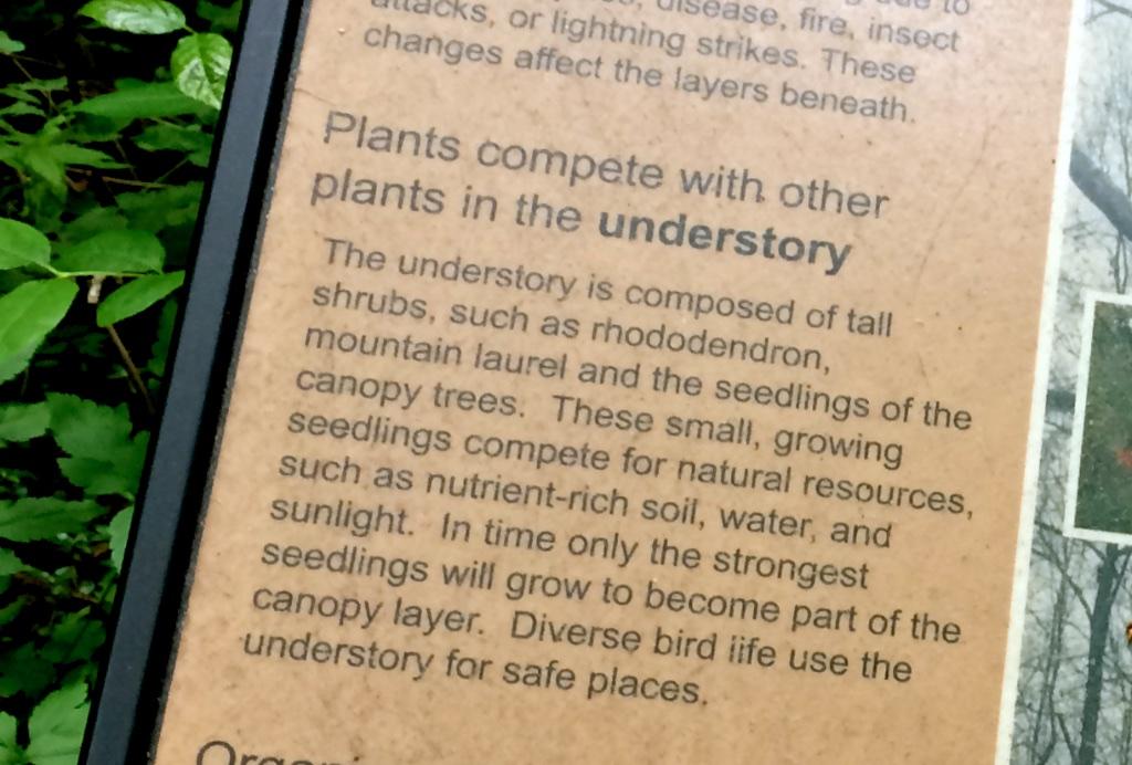 interpretive sign, Montreat forest