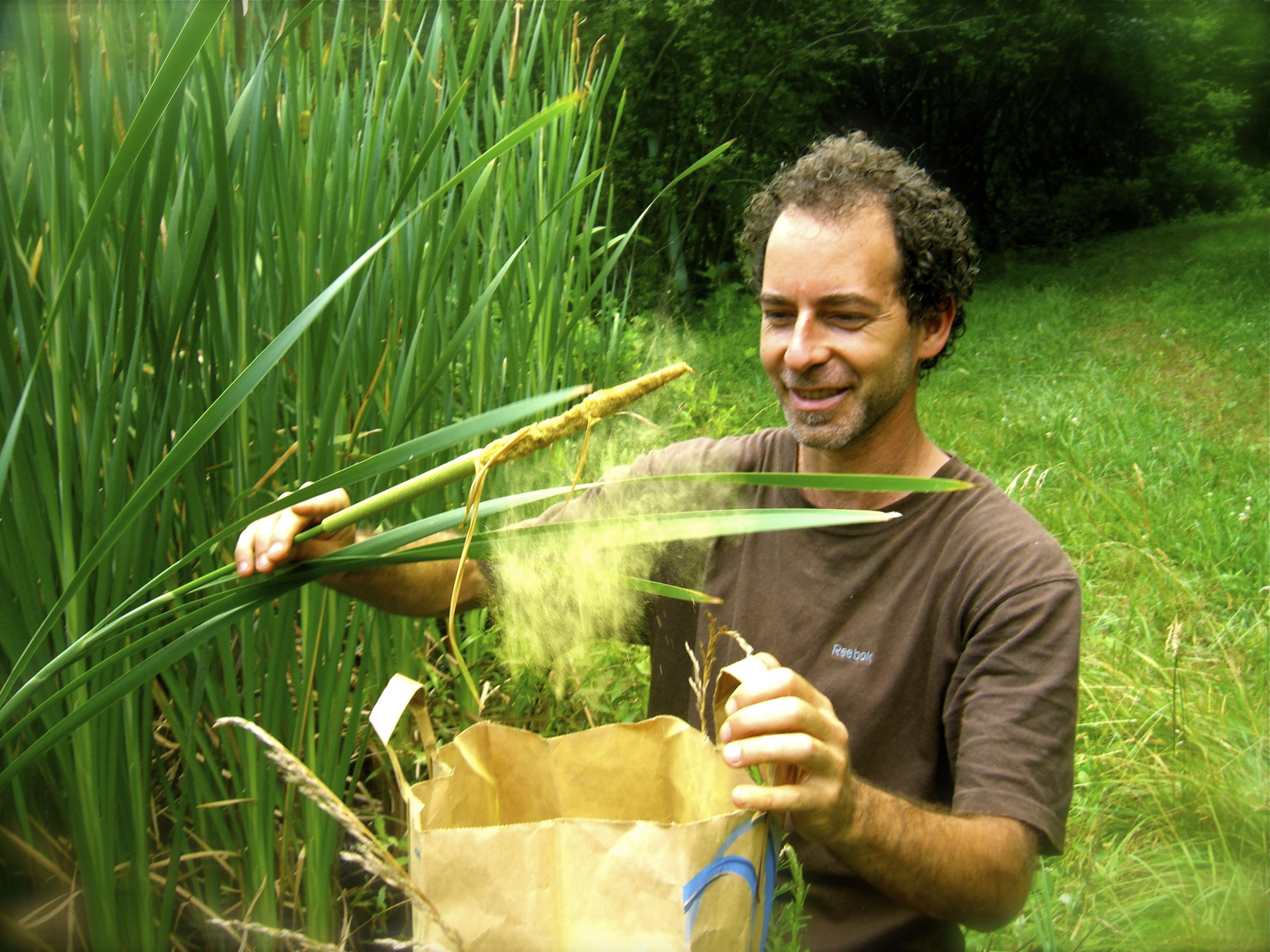 Muskat gathering cattail pollen