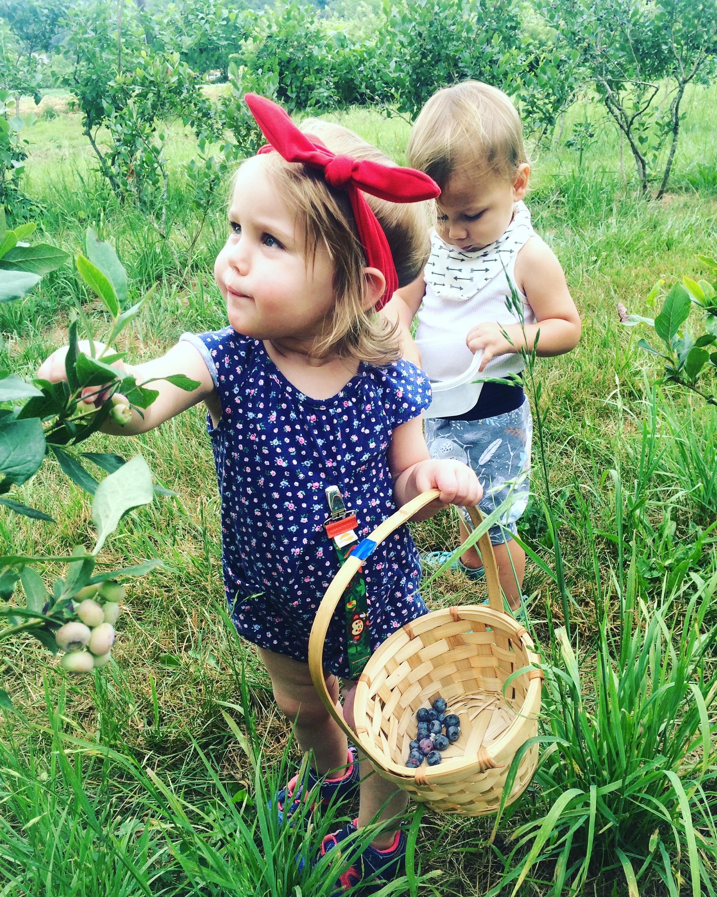 Juniper blueberries