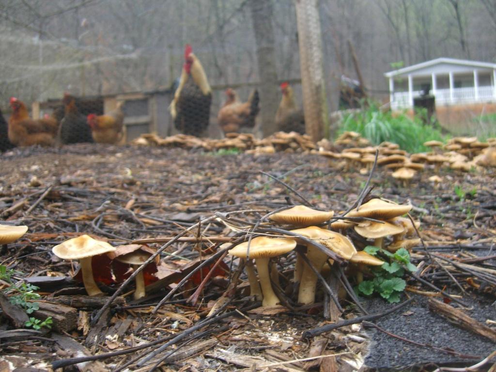 Old MacDonald Had a Fungus (2012)